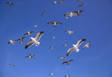 Seagull Music